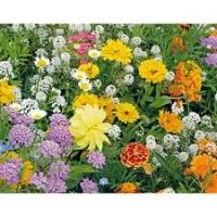 Friendly Flowers