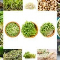 Organic Sprouting