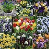 Bloembollen en knollen voorjaarsbloeiend