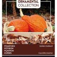 Buzzy® Ornamental, Pompoen Golden Hubbard