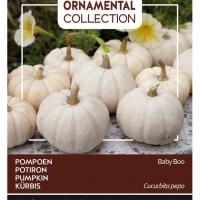 Buzzy® Ornamental, Pompoen Baby Boo