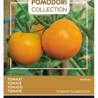 Buzzy® Pomodori, Tomaat Arancia