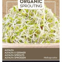 Buzzy® Organic Sprouting Alfalfa (BIO)