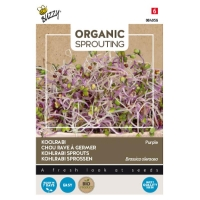 Buzzy® Organic Sprouting Koolrabi blauwpaars (BIO)