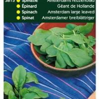 Spinazie Amsterdams Reuzenblad Scherpzaad, 250g