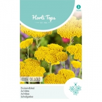 HT Achillea, Duizendblad Cloth Of Gold