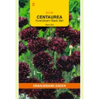 Centauria Cuanus Black Ball/Black Boy