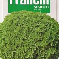 Basilico Fino Nana