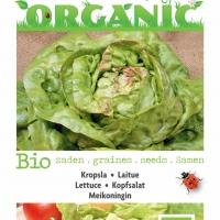 Buzzy® Organic Kropsla Meikoningin (BIO)