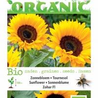 Buzzy® Organic Helianthus, Zonnebloem Zohar F1 (BIO)