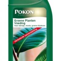 Groene kamerplanten voeding