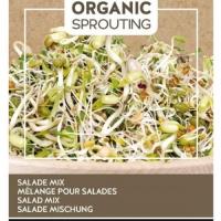 Buzzy® Organic Sprouting Linzen (BIO)